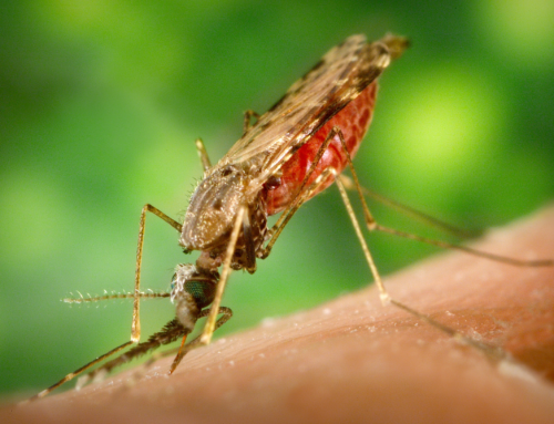 W.H.O. Declares Zika No Longer a Global Emergency