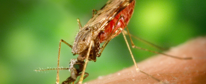 fly and zika virus